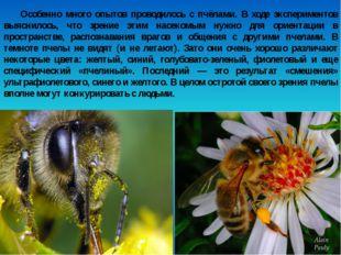 Особенно много опытов проводилось с пчёлами. В ходе экспериментов выяснилось,
