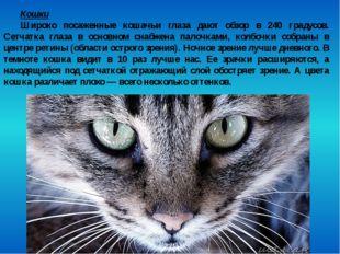 Кошки Широко посаженные кошачьи глаза дают обзор в 240 градусов. Сетчатка гла