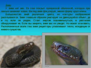 Змеи У змеи нет век. Ее глаз покрыт прозрачной оболочкой, которую при линьке