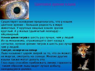 Цветовое зрение кошек Существует основание предполагать, что у кошек цветное
