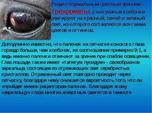 Люди с нормальным цветным зрением - трихроматы, у них разные колбочки реагиру