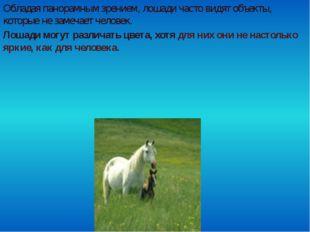Обладая панорамным зрением, лошади часто видят объекты, которые не замечает ч