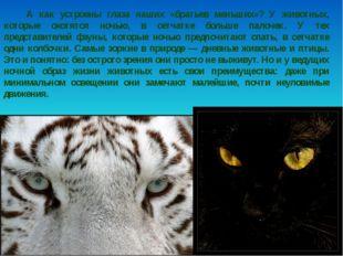 А как устроены глаза наших «братьев меньших»? У животных, которые охотятся н