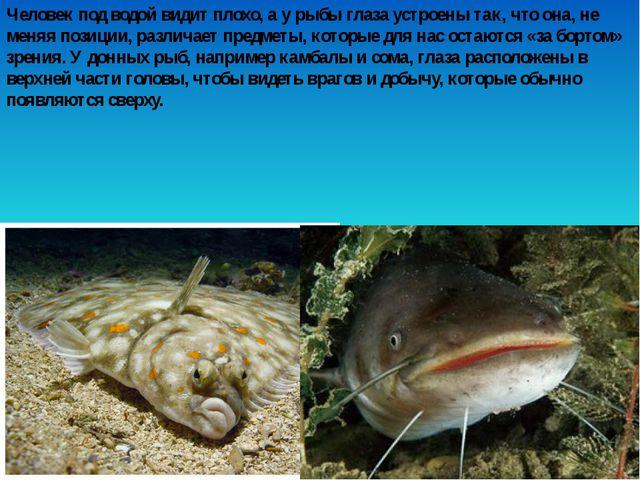 Человек под водой видит плохо, а у рыбы глаза устроены так, что она, не меняя...