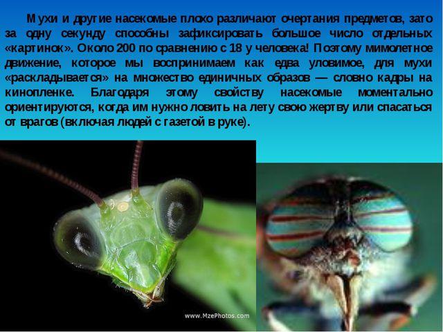Мухи и другие насекомые плохо различают очертания предметов, зато за одну сек...