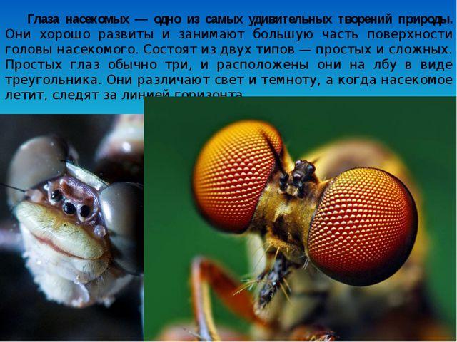 Глаза насекомых — одно из самых удивительных творений природы. Они хорошо раз...