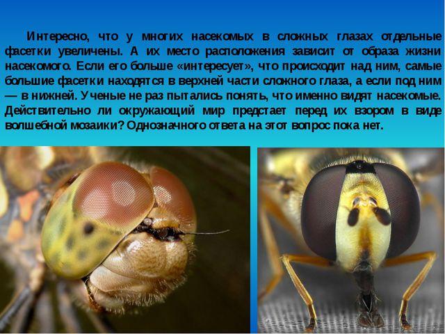 Интересно, что у многих насекомых в сложных глазах отдельные фасетки увеличен...