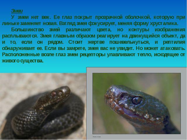 Змеи У змеи нет век. Ее глаз покрыт прозрачной оболочкой, которую при линьке...