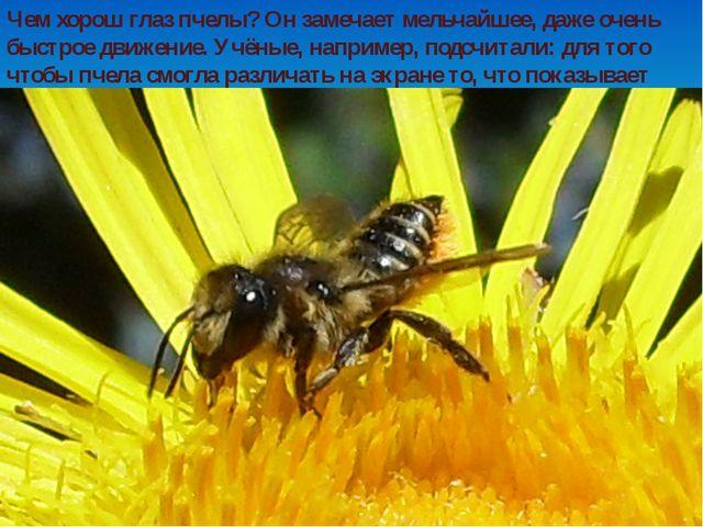 Чем хорош глаз пчелы? Он замечает мельчайшее, даже очень быстрое движение. Уч...