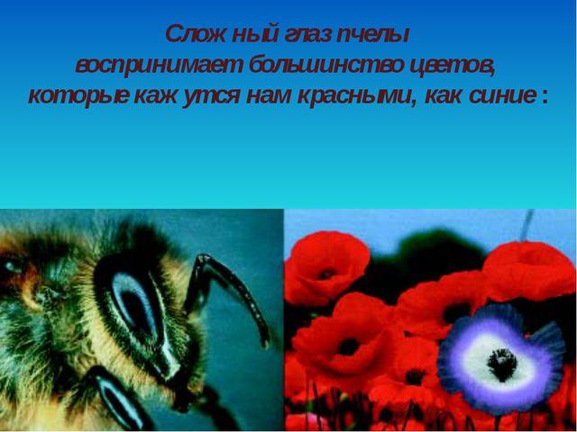 Сложный глаз пчелы воспринимает большинство цветов, которые кажутся нам красн...