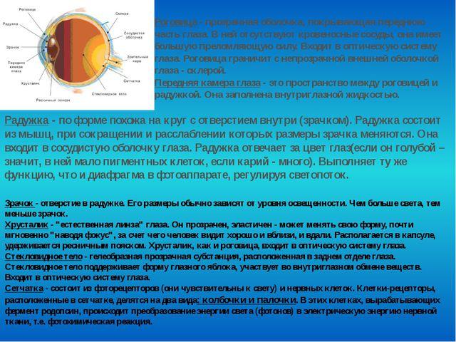 Роговица - прозрачная оболочка, покрывающая переднюю часть глаза. В ней отсут...