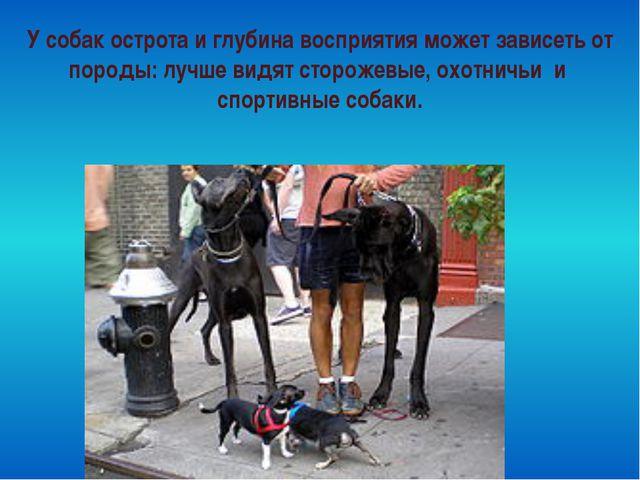 У собак острота и глубина восприятия может зависеть от породы: лучше видят ст...