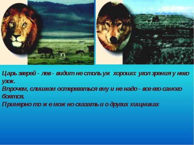 Царь зверей - лев - видит не столь уж хорошо: угол зрения у него узок. Впроче...