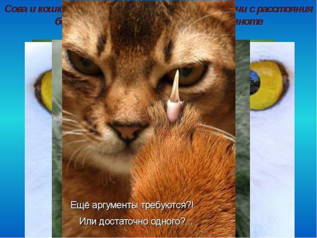 Сова и кошка могут различить свет горящей свечи с расстояния более 3 километр...