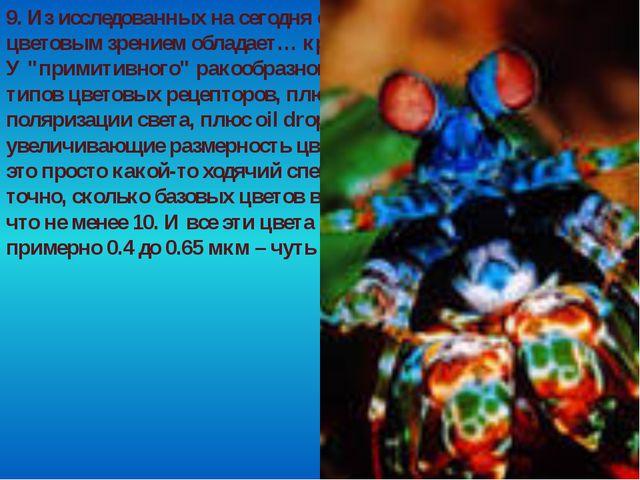 9. Из исследованных на сегодня существ самым развитым цветовым зрением облада...