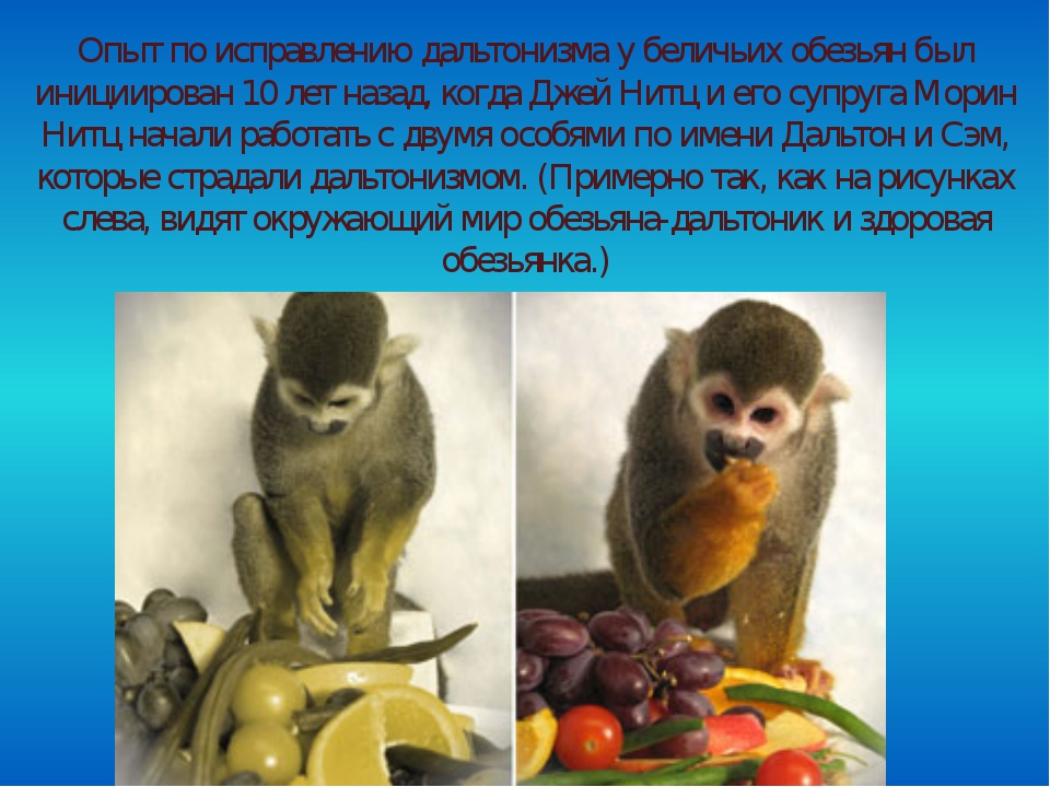 Опыт по исправлению дальтонизма у беличьих обезьян был инициирован 10 лет на...