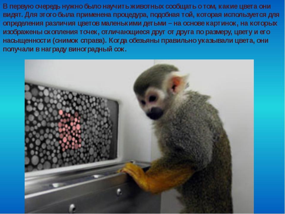 В первую очередь нужно было научить животных сообщать о том, какие цвета они...
