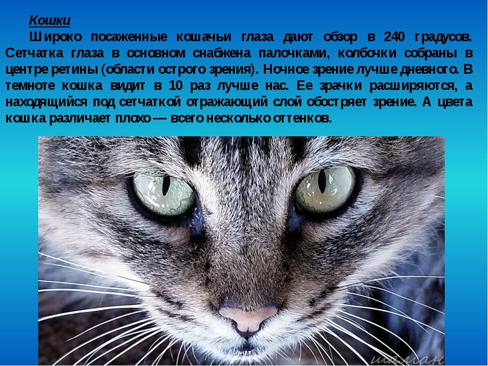 Кошки Широко посаженные кошачьи глаза дают обзор в 240 градусов. Сетчатка гла...