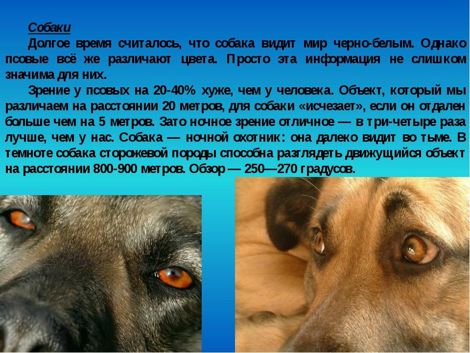 Собаки Долгое время считалось, что собака видит мир черно-белым. Однако псовы...