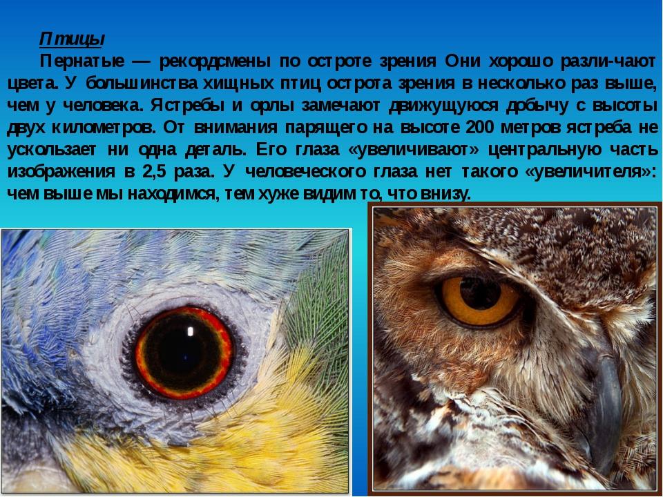 Птицы Пернатые — рекордсмены по остроте зрения Они хорошо различают цвета. У...