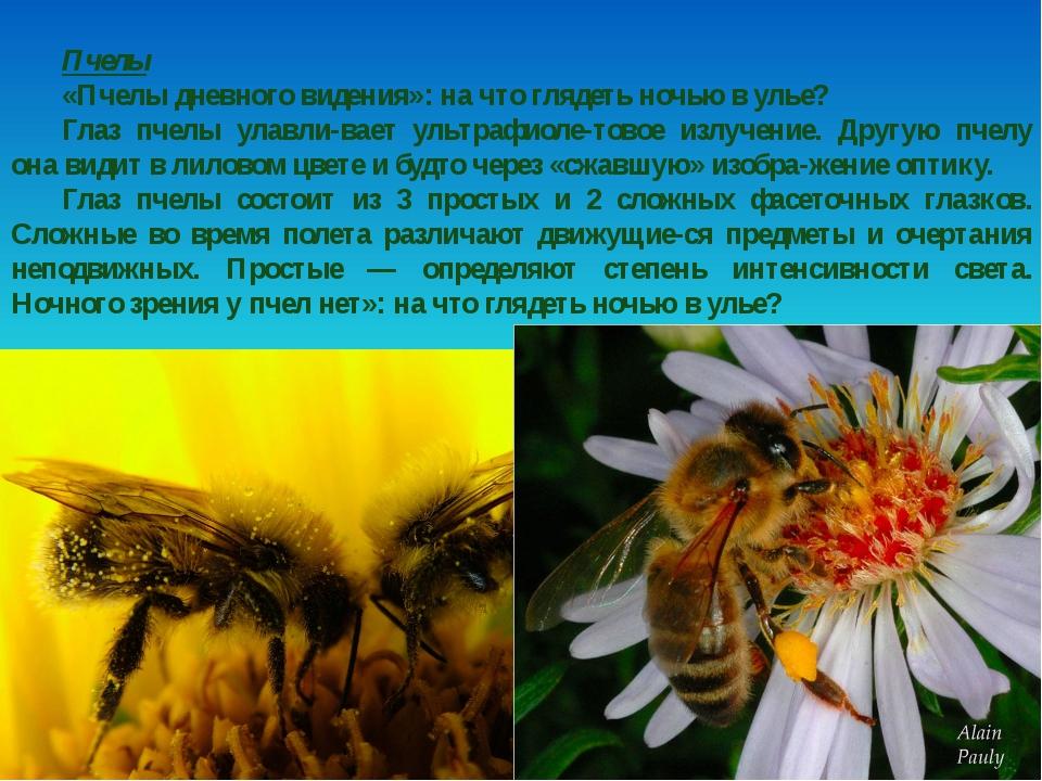 Пчелы «Пчелы дневного видения»: на что глядеть ночью в улье? Глаз пчелы улавл...