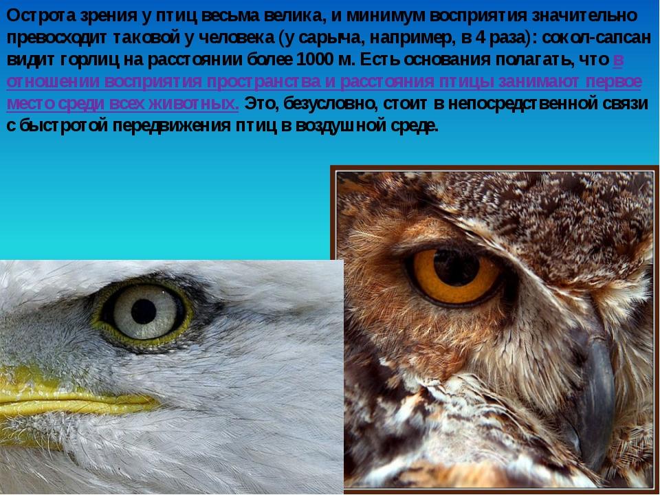 Острота зрения у птиц весьма велика, и минимум восприятия значительно превосх...