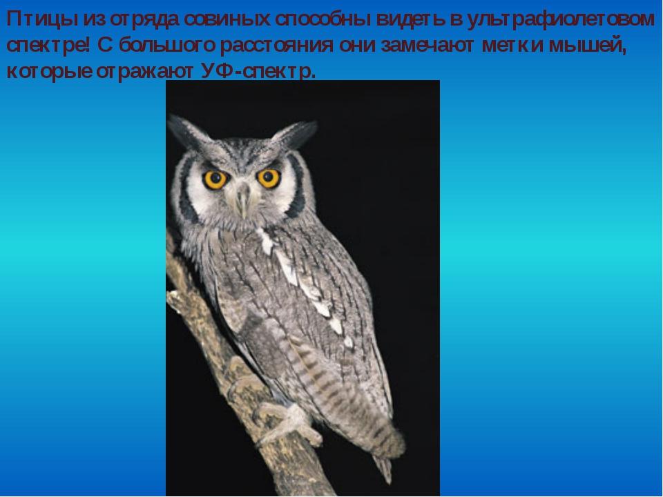 Птицы из отряда совиных способны видеть в ультрафиолетовом спектре! С большог...