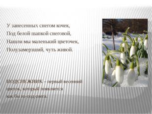 У занесенных снегом кочек, Под белой шапкой снеговой, Нашли мы маленький цве