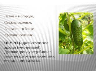 Летом – в огороде, Свежие, зеленые, А зимою – в бочке, Крепкие, соленые. ОГУ