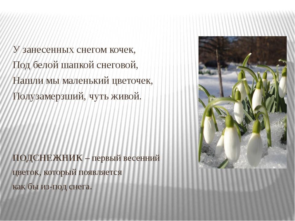 У занесенных снегом кочек, Под белой шапкой снеговой, Нашли мы маленький цве...