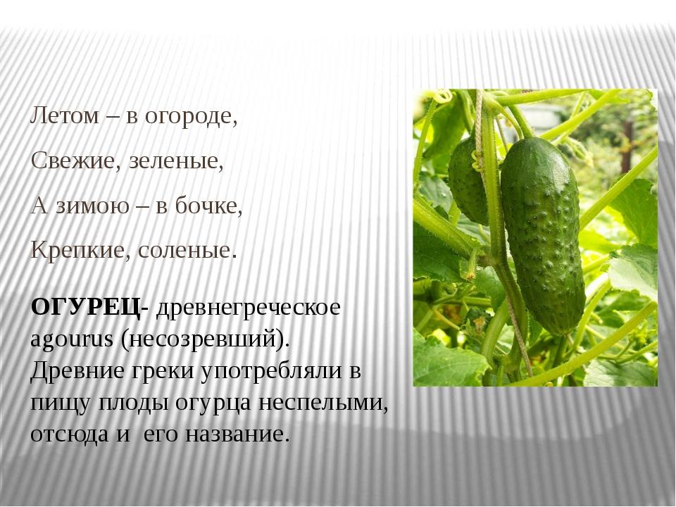 Летом – в огороде, Свежие, зеленые, А зимою – в бочке, Крепкие, соленые. ОГУ...