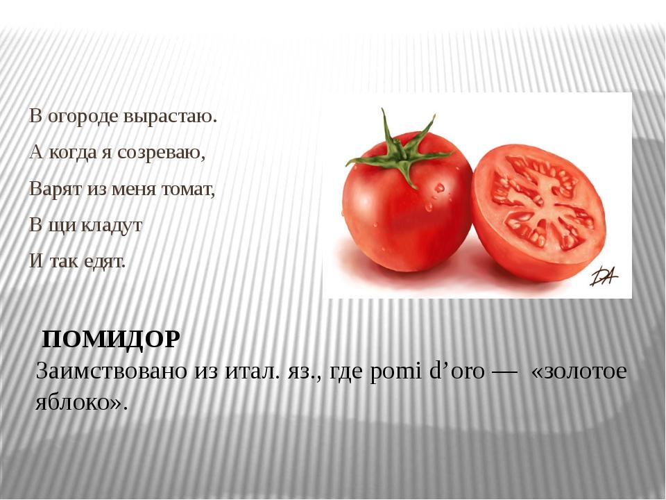 В огороде вырастаю. А когда я созреваю, Варят из меня томат, В щи кладут И т...