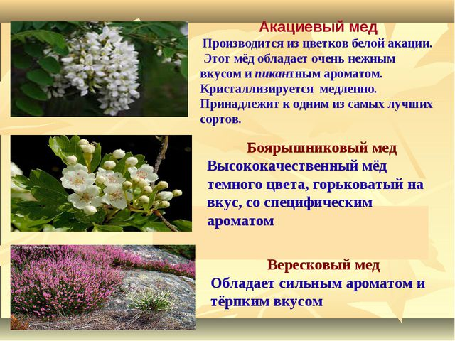 Акациевый мед Производится из цветков белой акации. Этот мёд обладает очень...