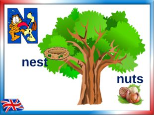 nest nuts