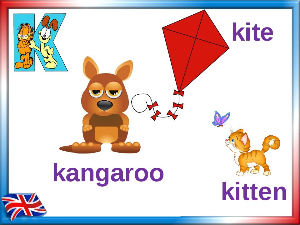 kangaroo kitten kite