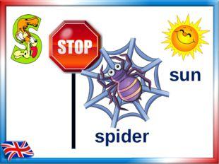 spider sun
