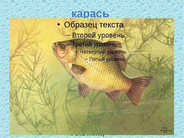 карась В реках и озерах Много зарослей в которых, И в карьерах обитает, И пру...