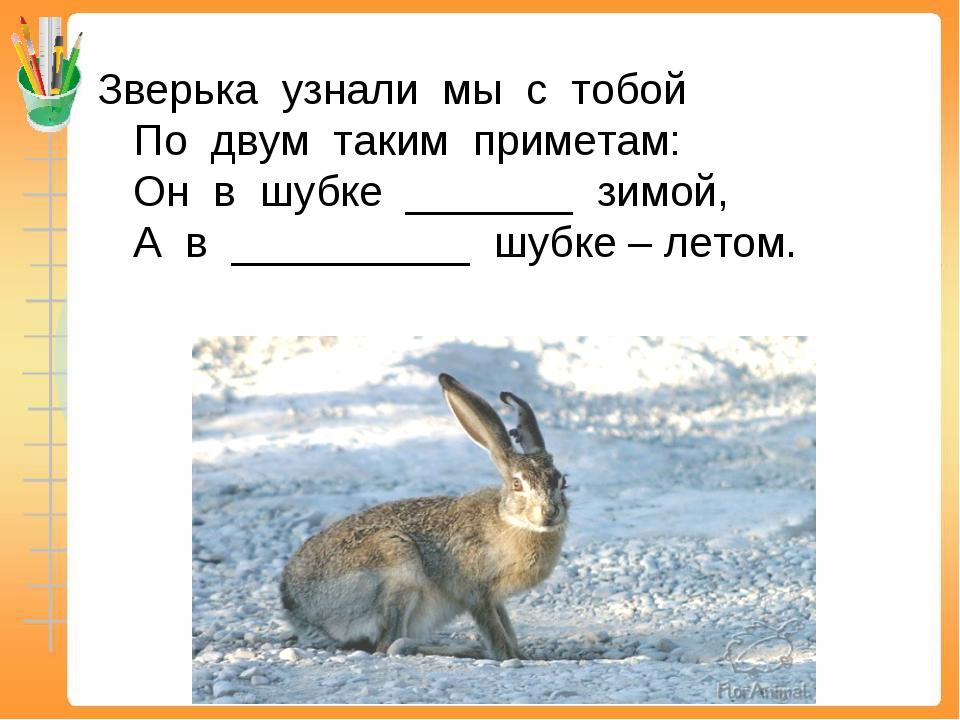 Зверька узнали мы с тобой По двум таким приметам: Он в шубке _______ зимой, А...