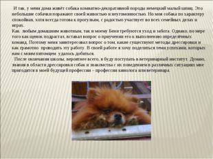 И так, у меня дома живёт собака комнатно-декоративной породы немецкий малый