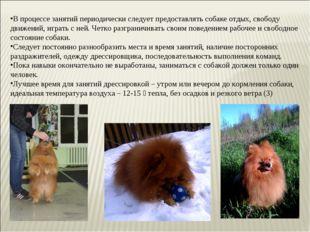 В процессе занятий периодически следует предоставлять собаке отдых, свободу д