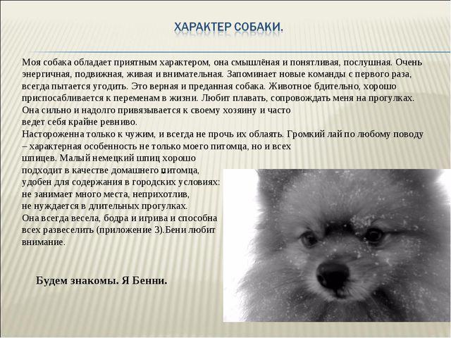 Моя собака обладает приятным характером, она смышлёная и понятливая, послушна...