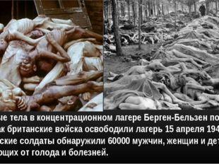 Мертвые тела в концентрационном лагере Берген-Бельзен после того, как британс