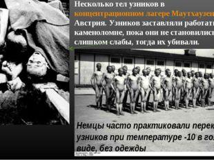 Несколько тел узников в концентрационном лагере Маутхаузен-Гузен, Австрия. Уз