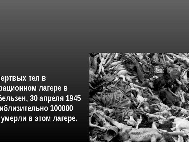 Груды мертвых тел в концентрационном лагере в Берген-Бельзен, 30 апреля 1945...
