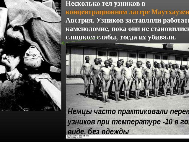 Несколько тел узников в концентрационном лагере Маутхаузен-Гузен, Австрия. Уз...