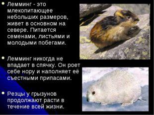 Лемминг - это млекопитающее небольших размеров, живет в основном на севере. П