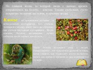 Но главная ягода, за которой люди с давних времен отправлялись на болото, - к