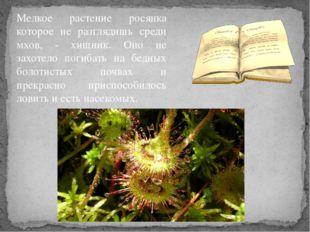 Мелкое растение росянка которое не разглядишь среди мхов, - хищник. Оно не за