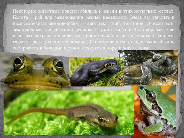 Некоторые животные приспособились к жизни в этих неуютных местах. Болота – ра...