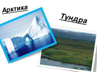 Арктика Тундра
